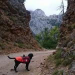 KAMPOVANJE MEĐU OBLACIMA: Irac i njegov labrador, na putu od Kolašina ka Podgorici