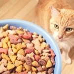 PROBIRLJIVICE: Mačke biraju hranu i prema obliku!