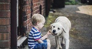 Psi mogu da prepoznaju lažljivce petface