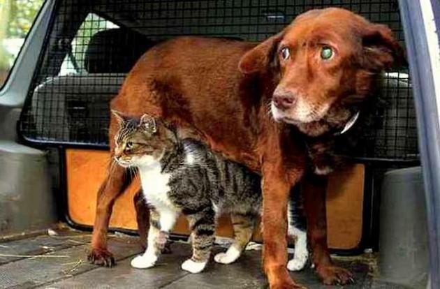 Slepog i gluvog psa petface
