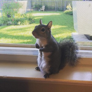 Spasili su vevericu iz uragana petface