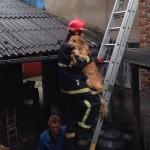 HRVATSKA: Vatrogasci spasili psa sa krova porodične kuće!
