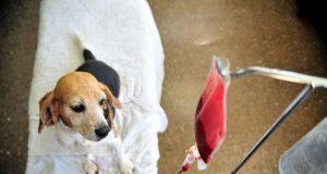 banka krvi za pse petface