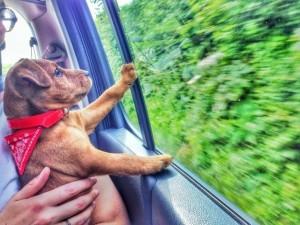 fotografije kućnih ljubimaca na putu ka novom domu petface
