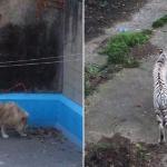 """Javnost uznemirena zbog izgladnelih životinja. Zoo vrt se brani tvrdnjama: """"To je genetska mutacija""""!"""