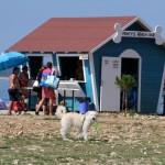 PRVI I JEDINSTVEN: Otvoren prvi kafić za pse!