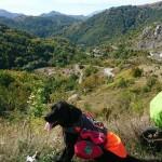 NA PAR KORAKA DO KRFA: pas Pajo verna je senka svog vlasnika