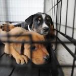 Oktobar je mesec udomljavanja napuštenih pasa – evo zašto udomiti, a ne kupiti!