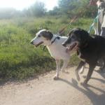 Oni su najstariji ljubavni pseći par: Ljubavna priča o Marinku i Marini iz Subotice!