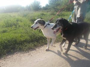 najstariji ljubavni pseći par petface