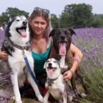 Beograđanka Jovana (29) otvorila obdanište za pse!