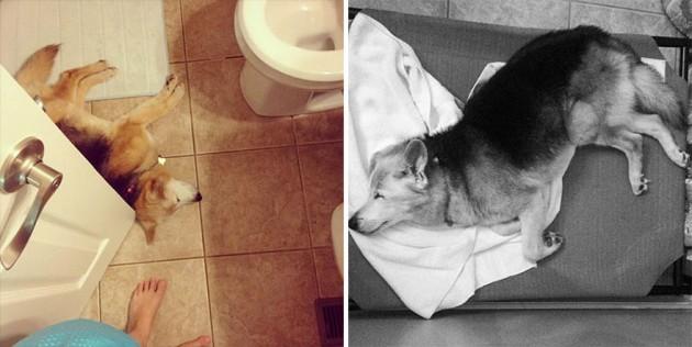 oprostila od svog psa petface