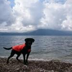 NA KORAK DO CILJA: Mark i pas Pajo uspešno su savladali i albansku rutu