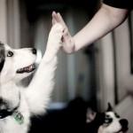 Zašto je pas idealan kućni ljubimac?
