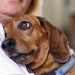 Ako vaš pas pokazuje neki od ovih 10 znakova – govori vam da vas voli!