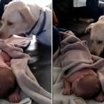 DA SE ISTOPIŠ OD MILINE: pas pokriva bebu dok spava (VIDEO)