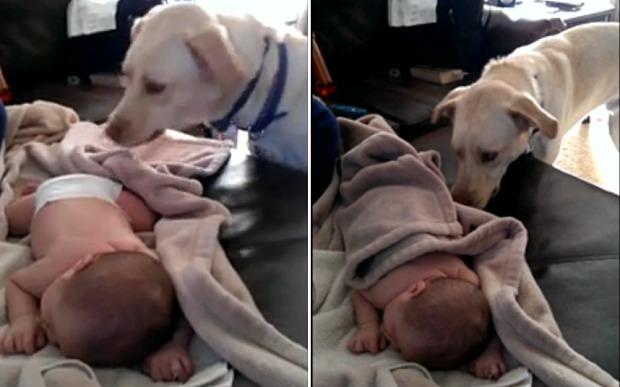 pas pokriva bebu petface