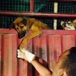 FOTOGRAFIJA PUNA EMOCIJA: Pas pruža šapu svom spasitelju! (FOTO)