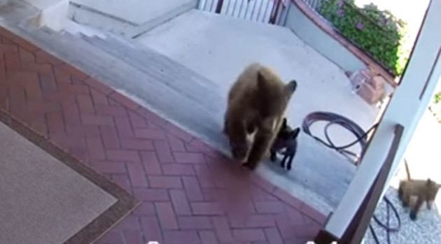 pas uplašio dva medveda petface