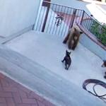 HRABROST KAKVA SE RETKO VIĐA: pas uplašio dva medveda