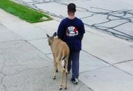 pomaže slepom jelenu petface