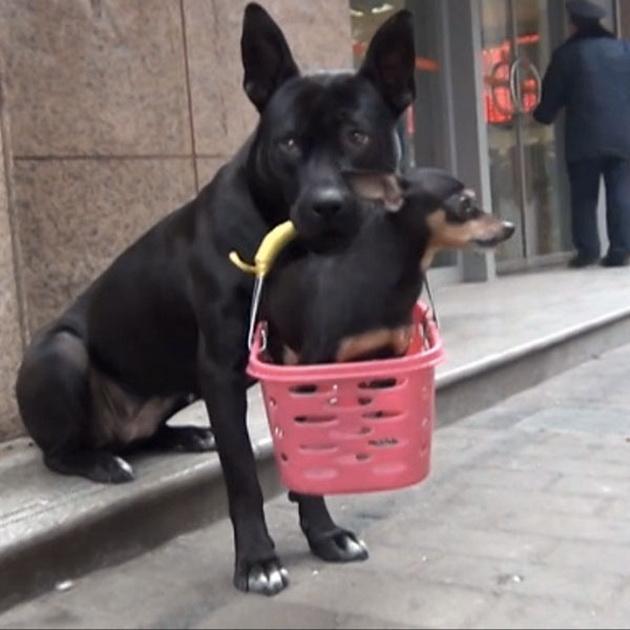 povređeno štene petface