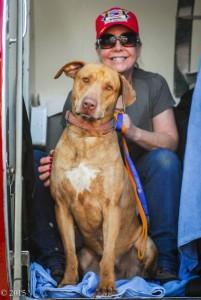 spasavaju pse eutanazije petface4