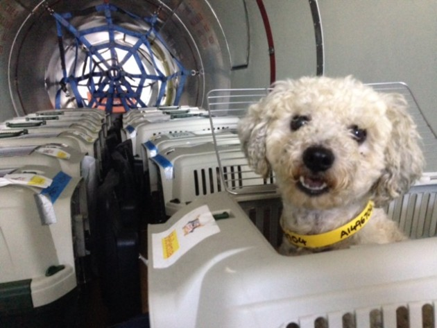spasavaju pse eutanazije petface