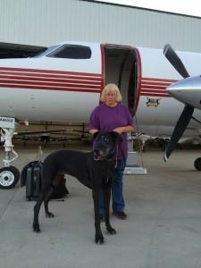spasavaju pse eutanazije petface7