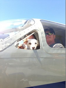 spasavaju pse eutanazije petface8