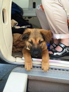 spasavaju pse eutanazije petface9