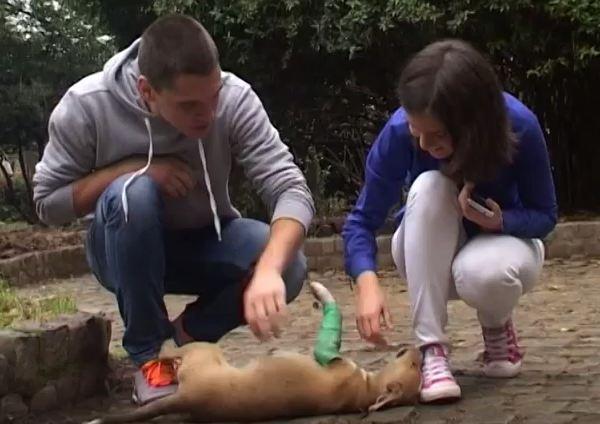 spasili život štenetu petface