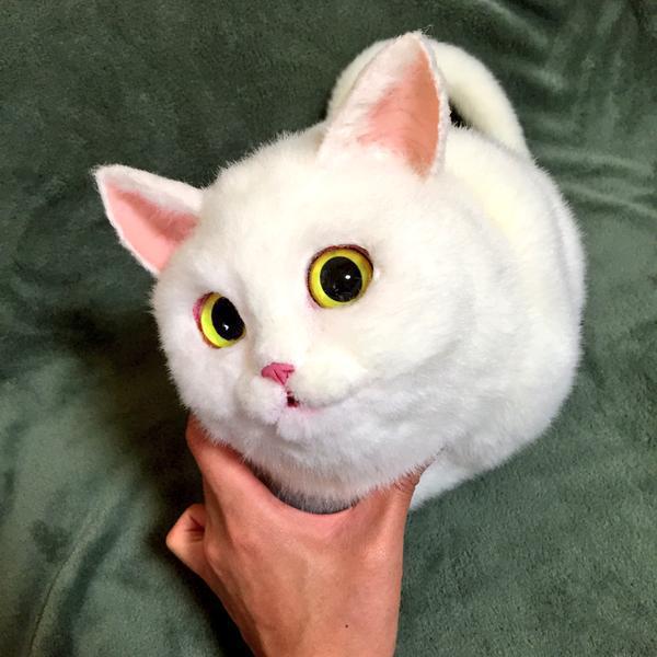 svi poludeli za ovim mačkama petface