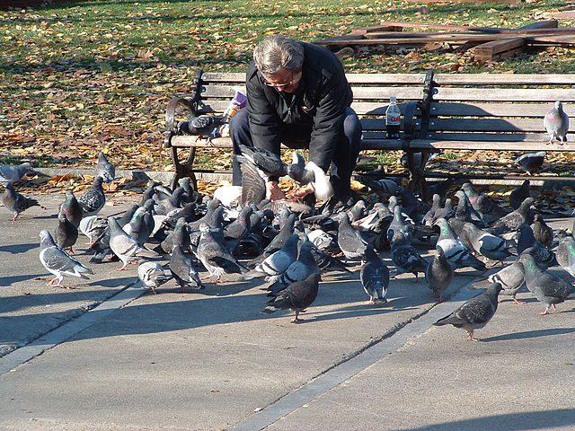 zbog hranjenja golubova petface