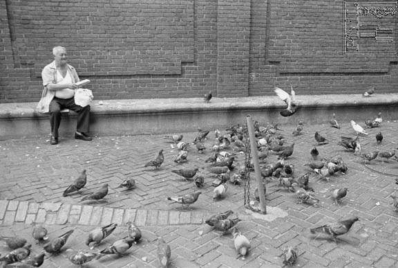 zbog hranjenja golubova plaća kazne petface