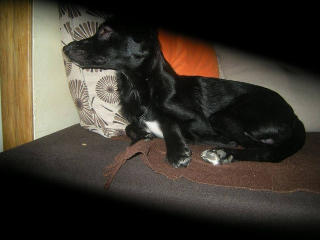 Nestao je moj pas petface