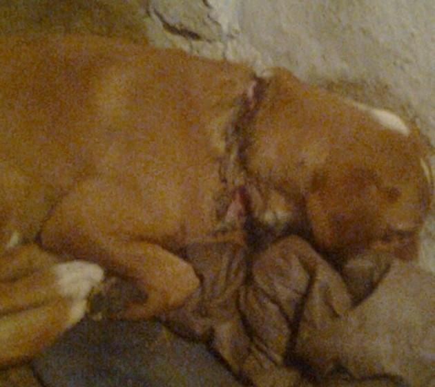 pas kojem je neko prerezao vrat petface