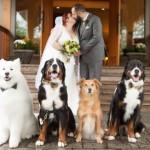 SPECIJALNI GOSTI: Ova 4 psa svojim prisustvom uveličala su venčanje svojih vlasnika