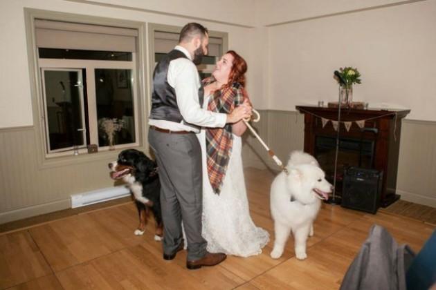 venčanje svojih vlasnika petface