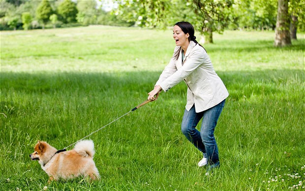 5 igrica koje će poboljšati kvalitet šetnje sa vašim psom petface