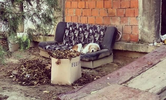 Anđeo čuvar napuštenim psima petface