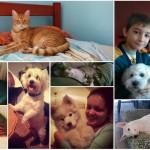 Vlasnički ljubimci pomažu napuštenim psima I macama!