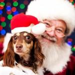 PROVOD KOJI SE NE PROPUŠTA: Deda Mraz čeka i vašeg ljubimca