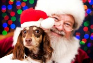 Deda Mraz čeka i vašeg ljubimca petface