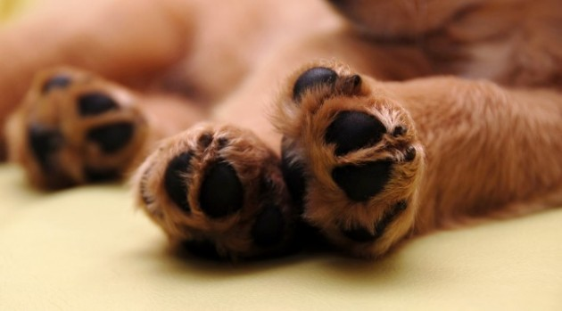Kako mi je moj udomljeni pas promenio život petface