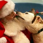 AKCIJA PETFACE-A: Paketić za napuštene kuce I mace – I njima je Nova godina!