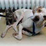 RUMA: Poenter sa slomljenom karlicom postao nerazdvojni prijatelj sa bolesnom macom!