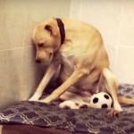 FOTOGRAFIJA KOJA JE SRUŠILA INTERNET: Reakcija psa koji je upravo vraćen u azil! (VIDEO)