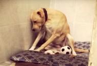 Reakcija psa petface