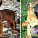 POSTUPAK VREDAN HVALE: Rusi su poklonili Francuskoj štene, u nameri da nadoknade smrt Dizel, psa koji je nastradao u terorističkom napadu